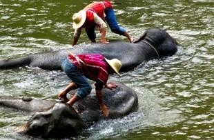 putao-elephants (3)